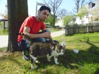 Katze scharf auf Chubz (arabisches Fladenbrot)
